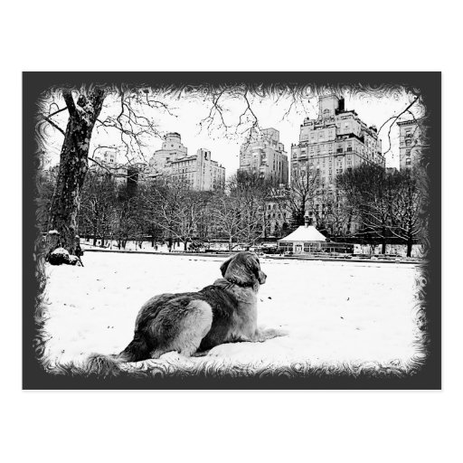 Golden by Conservatory Water-Central Park Postcard