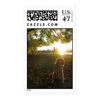 Golden by The Reservoir at Sunset stamp