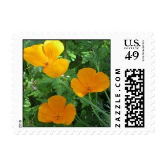 Golden California Poppies Postage Stamp