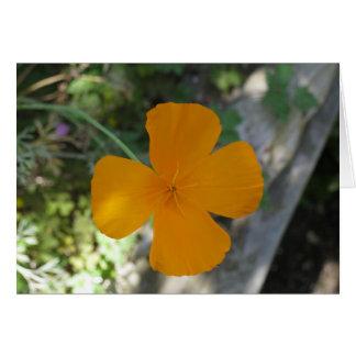 Golden California Poppy 1 Card