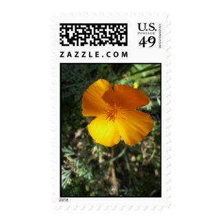 Golden California Poppy Stamps