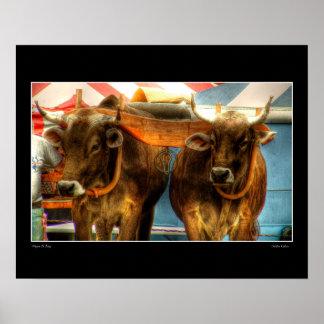 Golden Calves Poster
