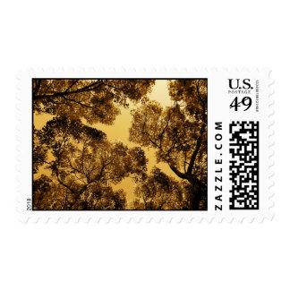 Golden Camphor Postage Stamps