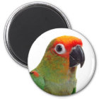 Golden-capped conure magnet