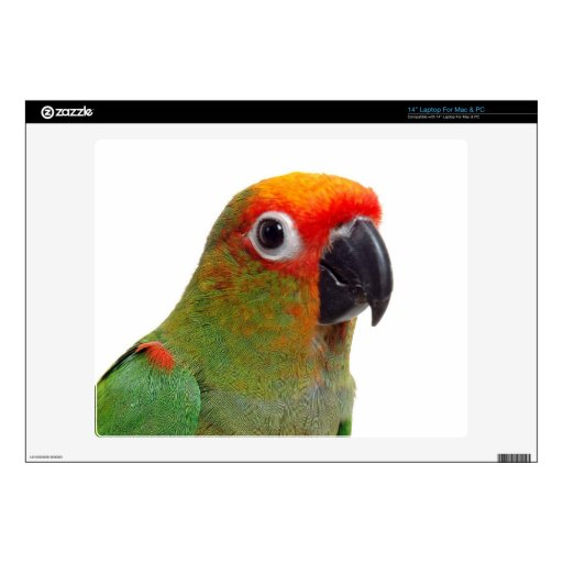 "Golden-capped conure decal for 14"" laptop"