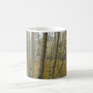 Golden Carpet Beneath a Grove of Quaking Aspen Classic White Coffee Mug