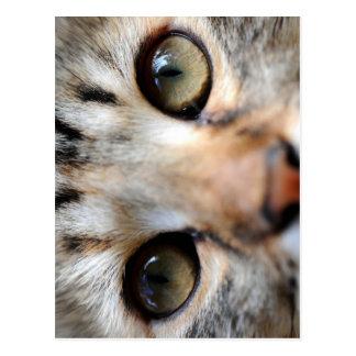 Golden Cat Eyes Postcard