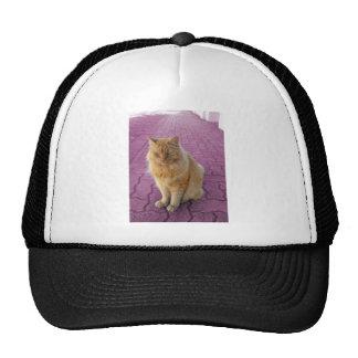 Golden Cat Trucker Hat