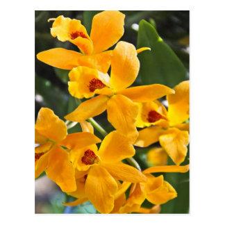 Golden Cattleya Postcard