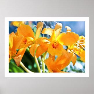 Golden Cattleya Poster