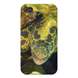 Golden Chain Moray iPhone 4 Covers