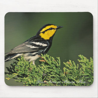 Golden-Cheeked Warbler Mouse Pad