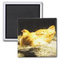 Golden Chicken magnet