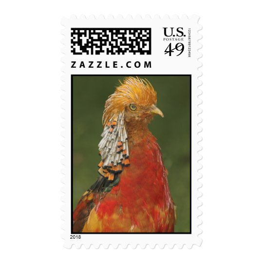 Golden/Chinese Pheasant Postage