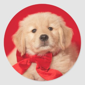 Golden Christmas Puppy Red Bow