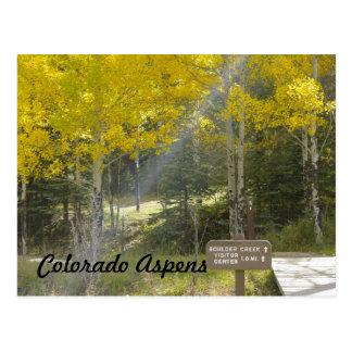 Golden Colorado Aspens Postcard