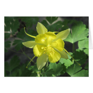 Golden Columbine Flower Card