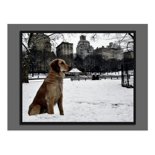 Golden-Conservatory Water-Central Park Postcard