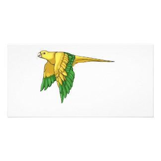 Golden Conure Products Card