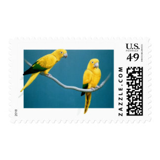 Golden Conure Stamps