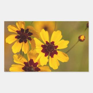Golden Coreopsis tinctoria Wildflowers Rectangular Sticker