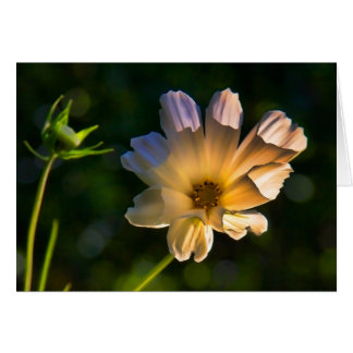Golden Cosmos - blank notelet / greetings Card