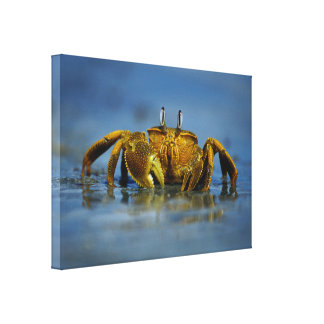 Golden Crab by the Sea Canvas Print