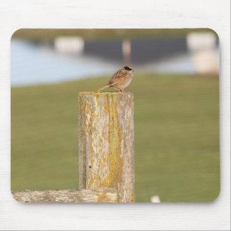 Golden Crowned Kinglet Bird Backyard BirdsBi Mouse Pad