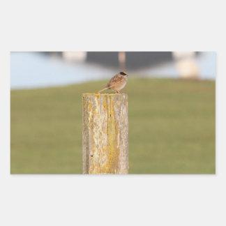 Golden Crowned Kinglet Bird Backyard BirdsBi Rectangular Sticker
