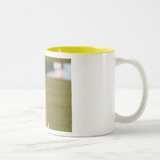 Golden Crowned Kinglet Bird Backyard BirdsBi Two-Tone Coffee Mug