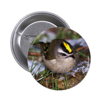 Golden-crowned Kinglet Button