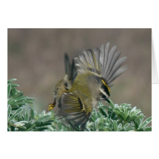 Golden-crowned Kinglet Greeting Card