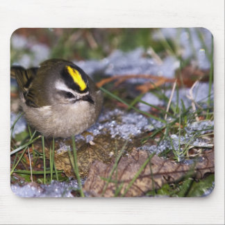 Golden-crowned Kinglet Mousepad