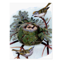 golden crowned kinglets postcard