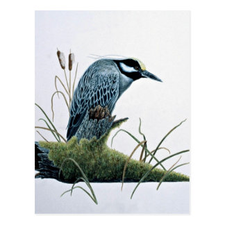 Golden-crowned night heron postcard