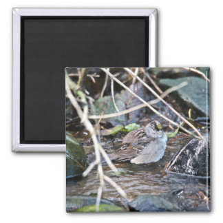 Golden-crowned Sparrow 2 Inch Square Magnet