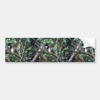 Golden Crowned Sparrow Bumper Stickers