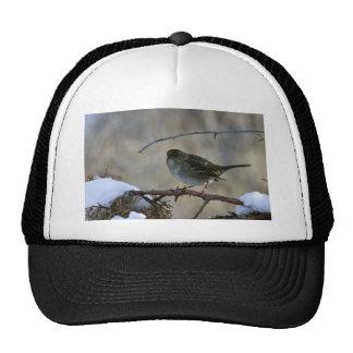 Golden-crowned sparrow trucker hat