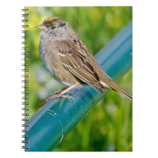 Golden Crowned Sparrow Notebook