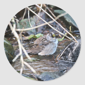 Golden-crowned Sparrow Round Stickers