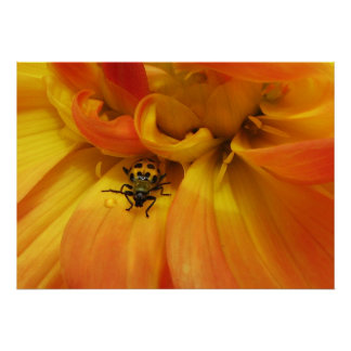 Golden Dahlia with Beetle Poster