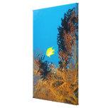 Golden Damselfish (Amblyglyphidodon aureus), Canvas Print