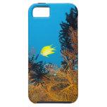Golden Damselfish (Amblyglyphidodon aureus), iPhone 5 Covers