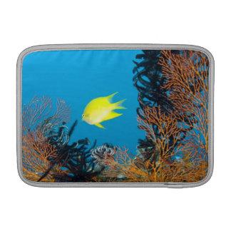 Golden Damselfish (Amblyglyphidodon aureus) Sleeves For MacBook Air