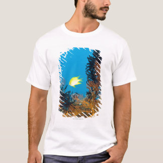 Golden Damselfish (Amblyglyphidodon aureus), T-Shirt
