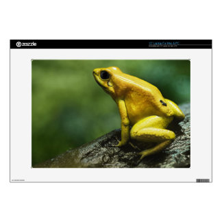 Golden Dart Frog Laptop Decal