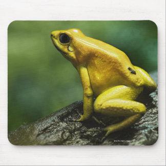 Golden Dart Frog Mouse Pad