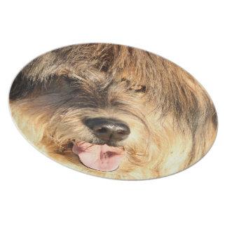 Golden Dog Dinner Plate
