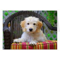 Golden Doodle Puppy Card