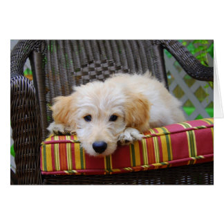 Golden Doodle Puppy Greeting Card